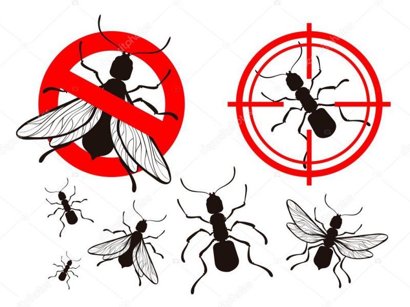 Why Pest Control From Professional Is Necessary