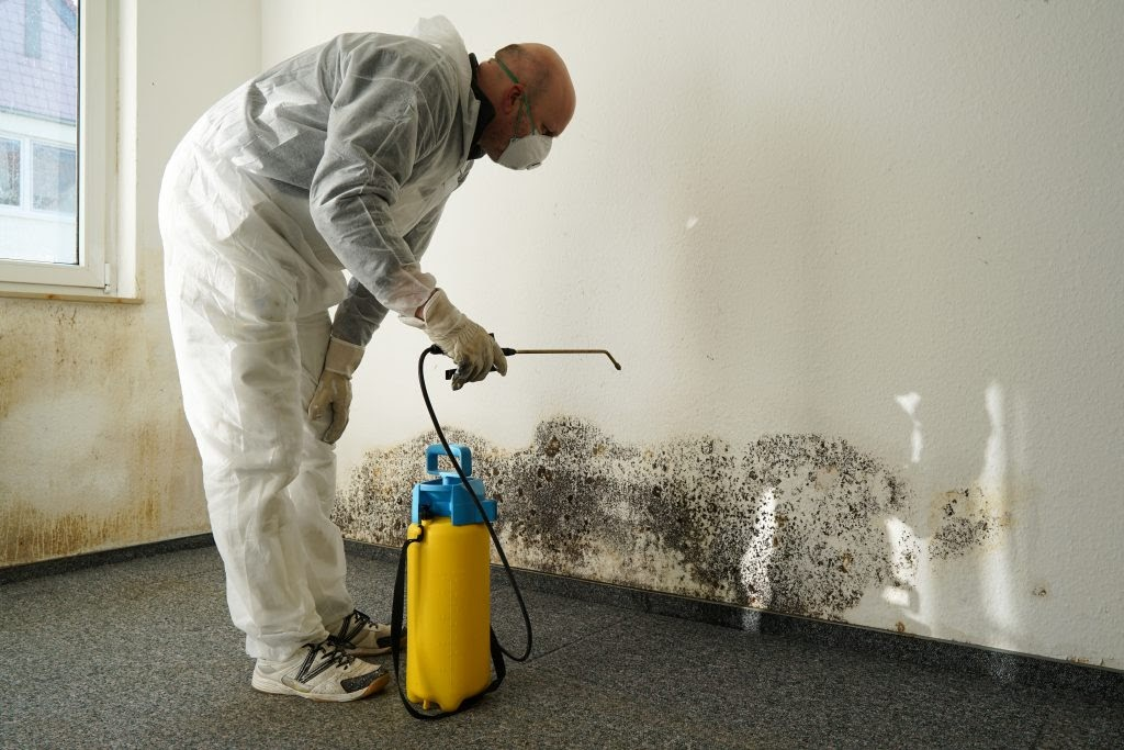Why Mould Removal Is Important Before Repairing A Construction?