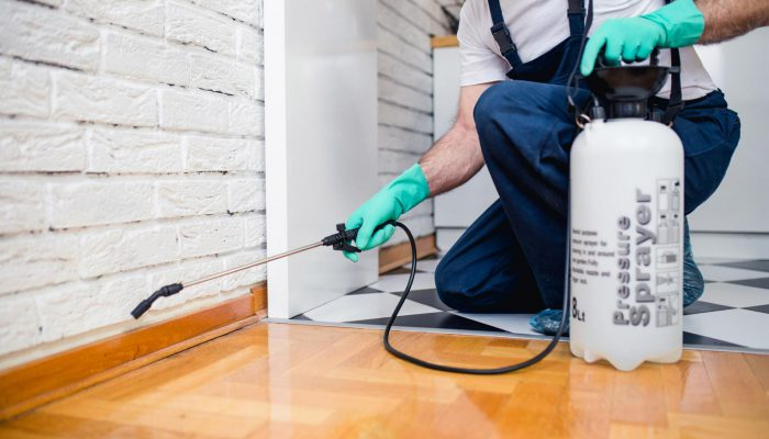 Reasons Why It Is Essential Do Regular Pest Control Services